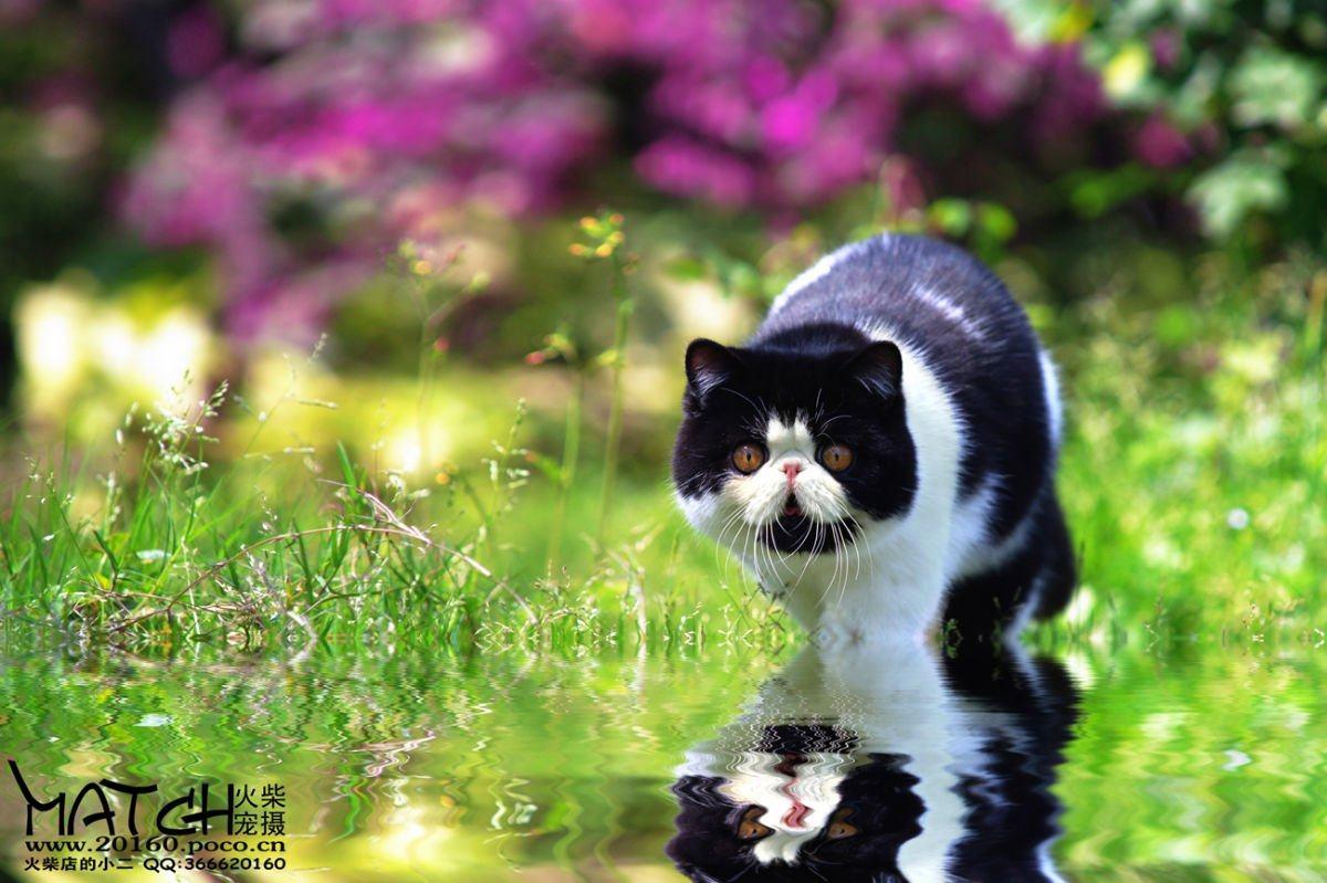 七仔壁纸_【加菲猫-七仔】---火柴店的小二 (当喵星人在公园遇上摄影师之后)