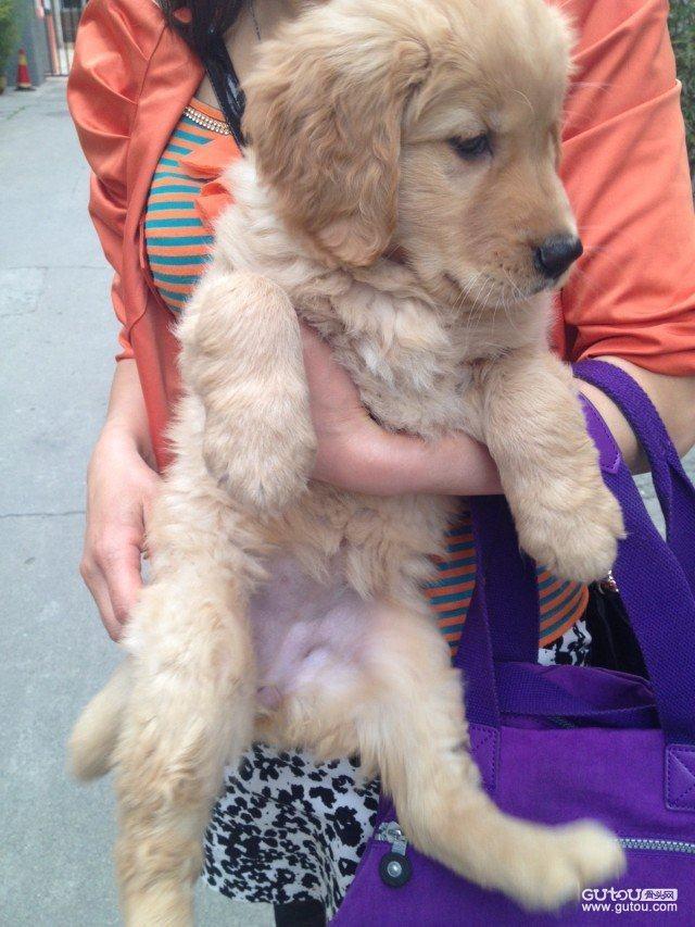 从小到大就很喜欢小动物,维尼是我养的