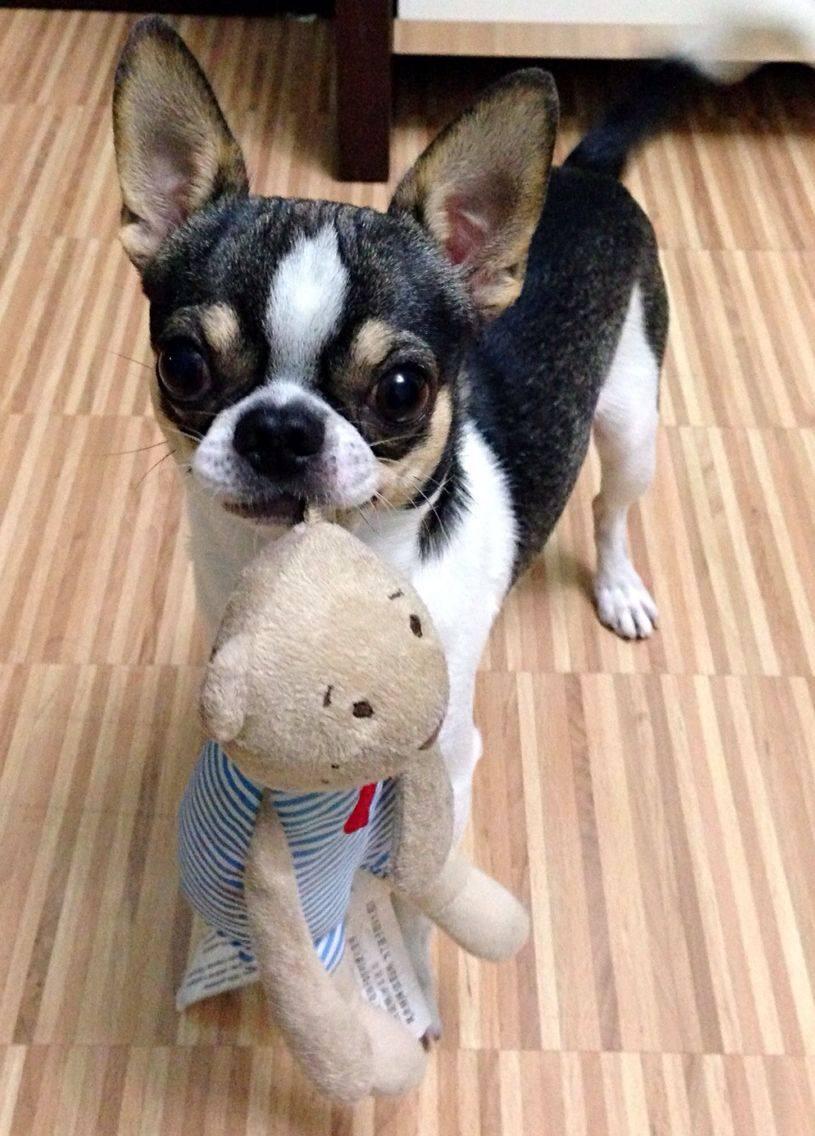 蔻宝的亲密伙伴91可爱的毛绒玩具-吉玩具宝贝蔻的小娃娃加盟商图片