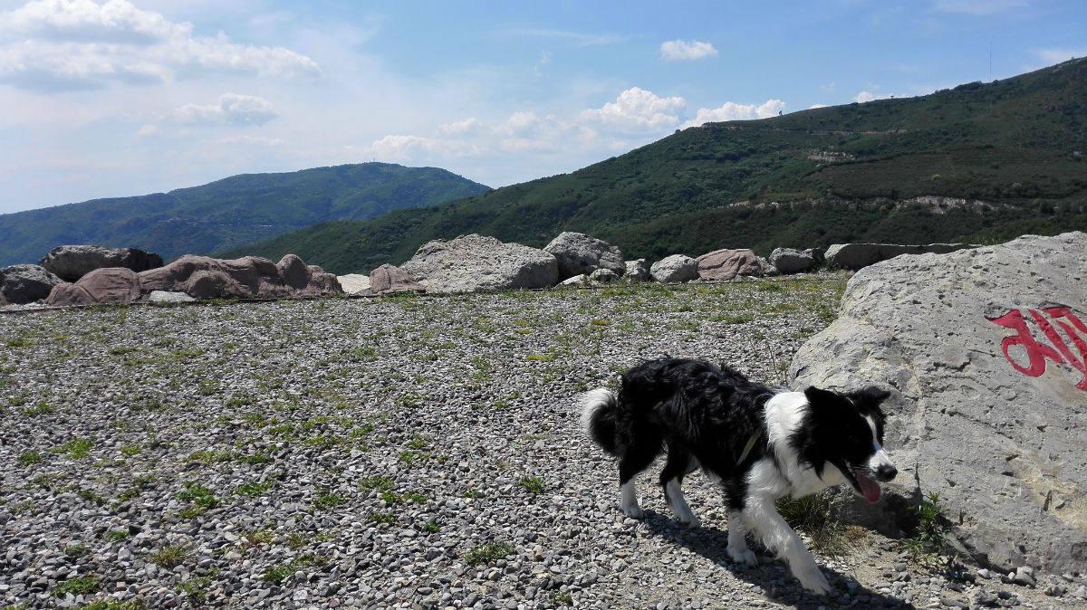 妙峰山森林公园, 边境牧羊犬闹闹的故事图片图片