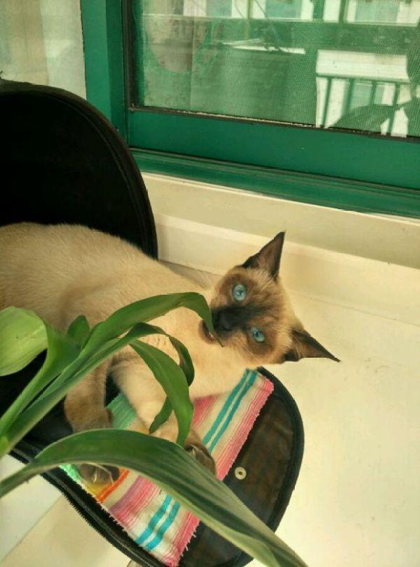 下半晌、阳光、酷爱猫,生活如此骈杂,但感触此雕刻么的