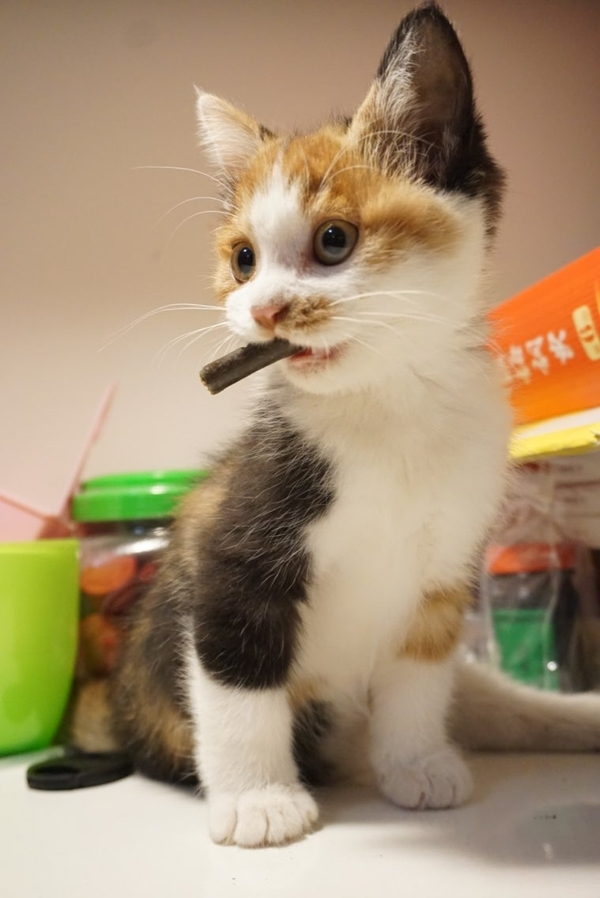 豆花!等等!影音:谁叫我?-中华美女猫美女的三剑客豆花朝鲜西瓜田园图片