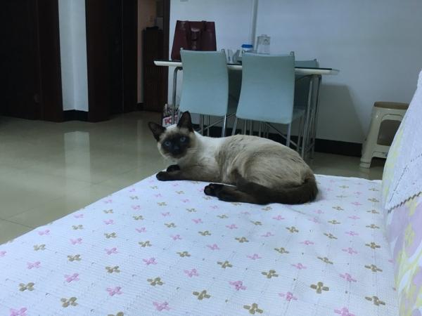 为啥.介么圆 - 暹罗猫Miracle的图片 - 骨头网